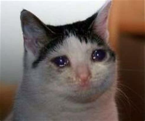 Crying Cat Meme - gato chorando imagens e memes pinterest