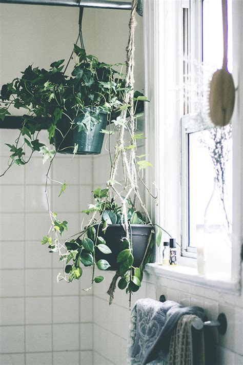 plants to keep in bathroom 8 ways to make a rented apartment feel like home