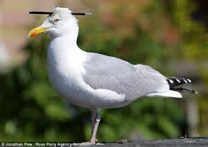 second seagull found with bolt through its head in tourist