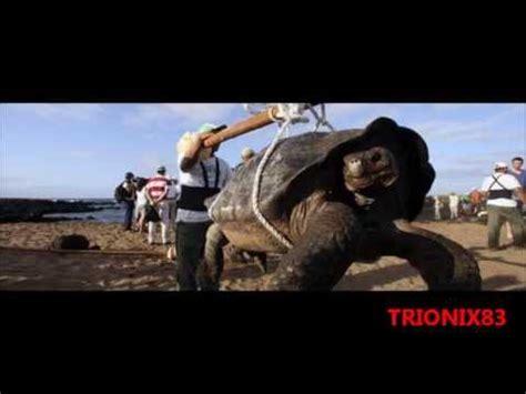 imagenes de tortugas raras animales extra 241 os tortugas gigantes las tortugas mas