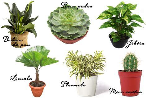fazer plantas jardim de inverno como fazer dicas e plantas vida de