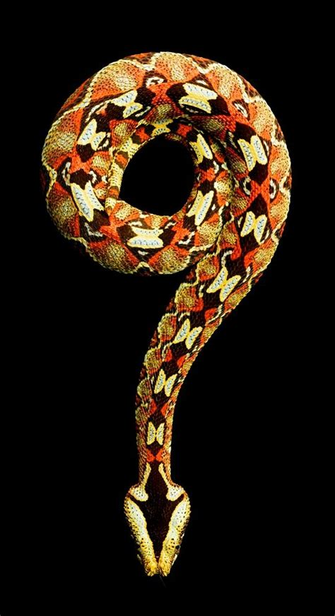 pattern up slang vivid snake photos come at a cost a bite from a black