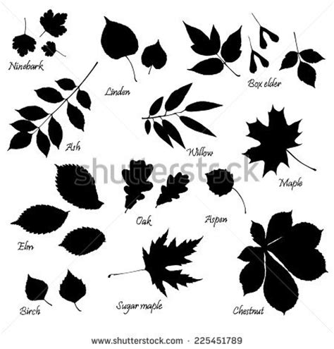 Simple Listy Black And White elm stock photos images pictures