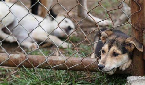 imagenes de animales de zacatecas maltrato animal ntr zacatecas com