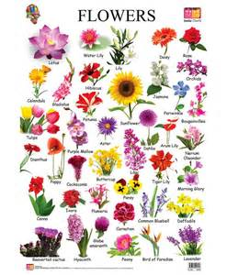 flower names more photos