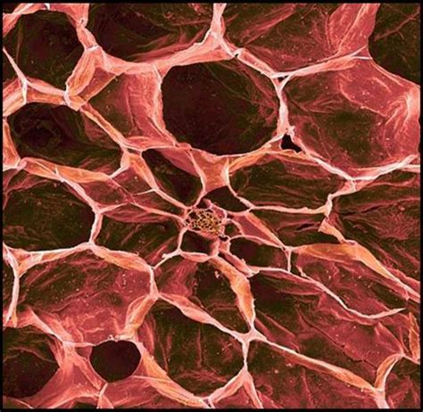 hikt bentuk makanan harian  dilihat  mikroskop