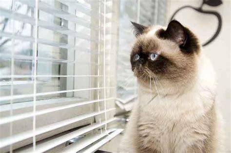 imagenes gatos tristes c 243 mo reconocer si tu gato est 225 triste hogarmania