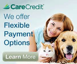 care credit for dogs care credit pet financing veterinarian in ta fl