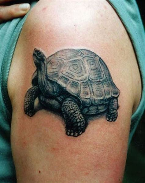tortoise tattoo tortoise tortoise and