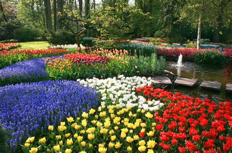 amsterdam flower garden amsterdam visite des jardins de keukenhof et des chs