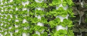 Strawberry Vertical Garden - the vertical farmer future growing llc