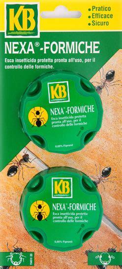come sterminare le formiche in casa formicarium it leggi argomento formiche a casa tante