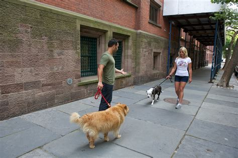 leash aggression in dogs just to be social the proper way to make intros and cure leash aggression