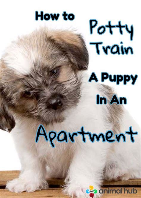 how to potty an in an apartment how to potty a puppy in an apartment potty and puppies