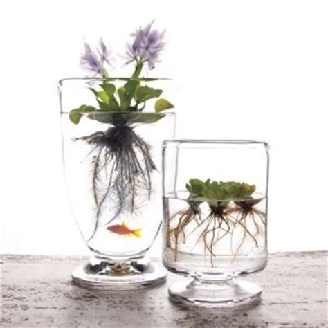 floating plants   awesome decoration  easy
