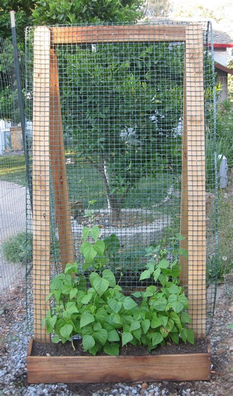 Vegetable Garden Trellis Ideas 25 Best Ideas About Bean Trellis On Pinterest Growing Runner Beans Cucumber Trellis And