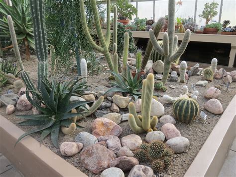 backyard cactus garden cactus landscaping guide to landscaping with cacti