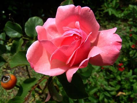 imagenes sorprendentes de flores fotos de flores exoticas chainimage