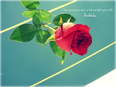 imagens de flores com frase frases y flores imagui