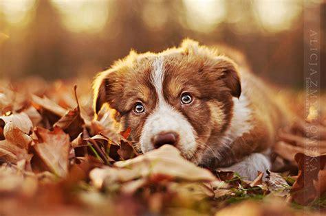 bella sesion de fotos  perros como modelos
