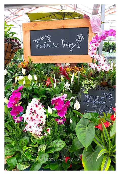 southern living home collection southern living plant collection and home depot 2