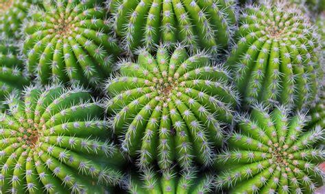 Kaktus Pflanzen Pflegen Und Vermehren Das Haus