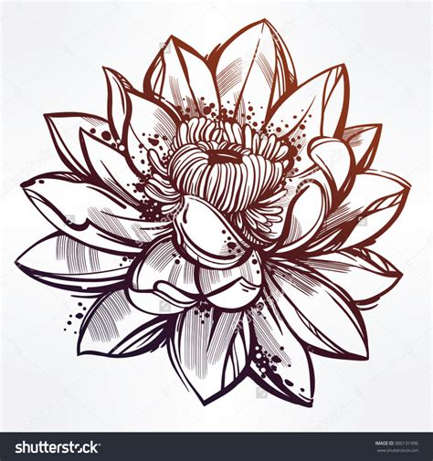 Simple Vase Lotus Flower Drawing Drawing A Simple Lotus Flower How