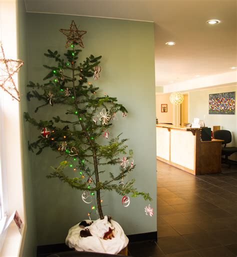 oh christmas tree kannon animal hospital blog