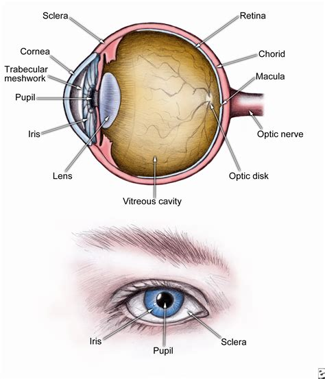 cross section synonym corneal abrasion topic guide