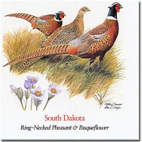 state bird of south dakota south dakota