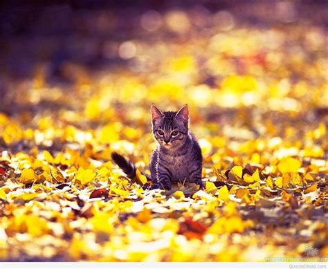 wallpaper cat autumn fall wallpaper with cats wallpapers gallery