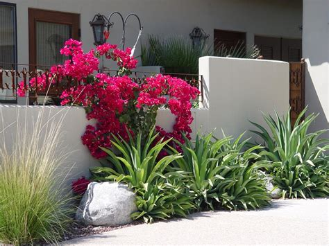 heat loving plants driveway landscaping landscaping network