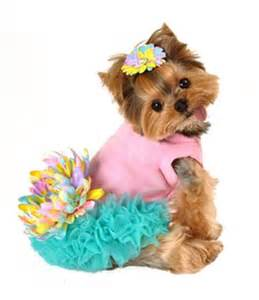 teacup yorkie clothes cheap 403 best dressed up yorkie images on yorkie terriers and yorkies