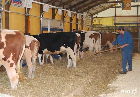 vache au comptoir vaches et chevaux disparaissent du comptoir 233 montain