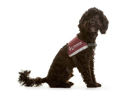 hearing dogs help us support hearing dogs for deaf noisenews