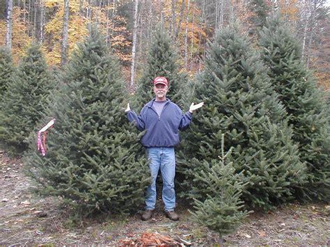 christmas trees northern va tree tree farms in northern virginia tree farms in northern