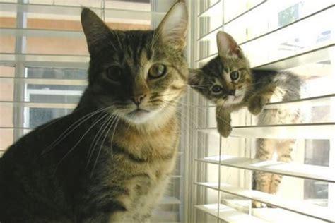 un gato y un c 243 mo saber la edad de un gato todas las formas que existen