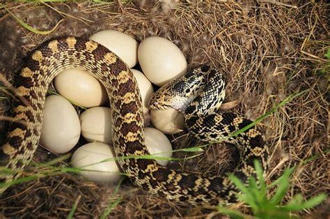 animales vertebrados donde viven como nacen como nacen las serpientes donde viven como nacen