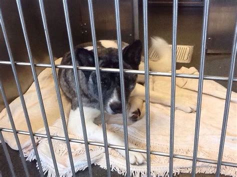 shelters in columbus ohio 17 best images about urgent owner surrenders adoptable dogs on adoption