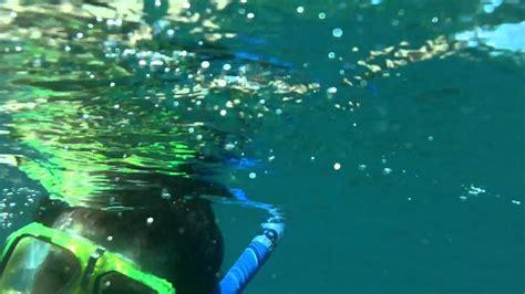catamaran snorkeling montego bay jamaica snorkeling montego bay youtube