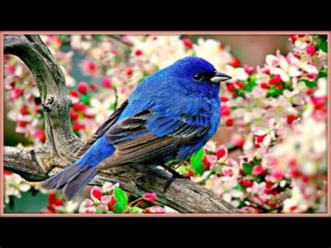 coldplay birds mp3 download jungle vibe birds singing sound effect videolike