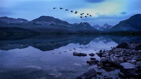 wallpaper birds usa glacier national park rocky