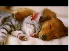 PET THERAPY For Cats and Dogs 2/2 -Relax, De-Stress ... Hours Of Sleep Required