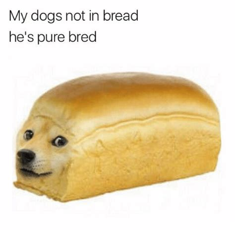 bread puppies my dogs not in bread he s bred dogs meme on sizzle