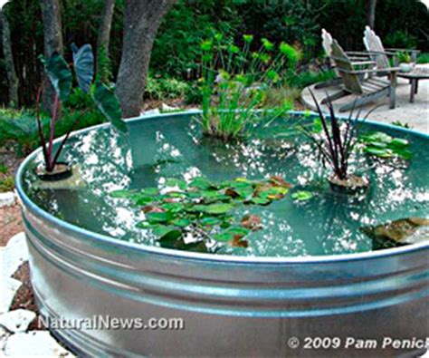 clean backyard pond revitalize your backyard water garden with spring pond maintenance and cleaning