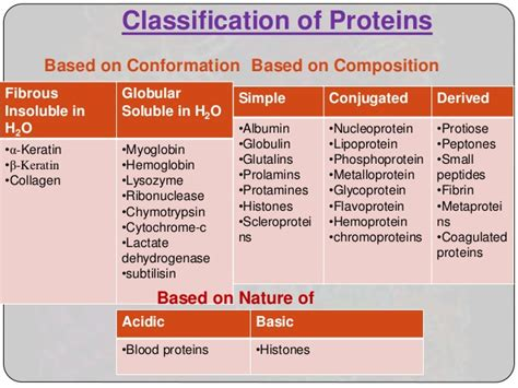 n protein function structure functions and folding problems of protein