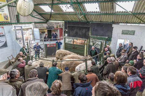 livestock auction image gallery livestock market
