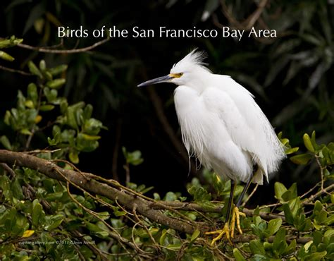 birds of the san francisco bay area calendar 2