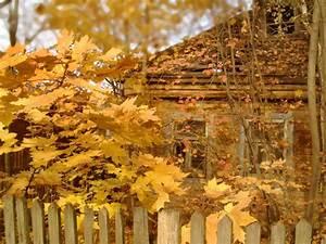 Осень картинки на ногтях