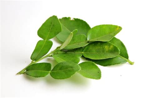 leaves for added flavor kaffir lime leaves curry leaves bay leaves and pandan leaves